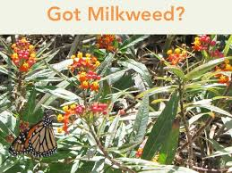 Texas Vegetable Garden Calendar by Got Milkweed Updated Plant Guide For Central And South Texas