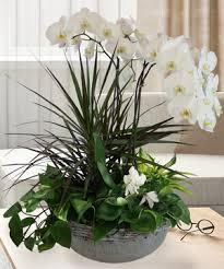 Orchid Plants Orchid Plants Orchids U0026 Exotic Plants Veldkamp U0027s Flowers Denver Co