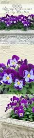 diy spring to summer pansy planters gardening purple pansy flowers