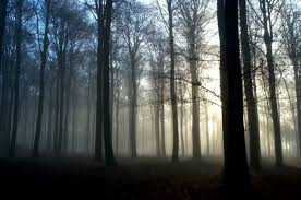 wallpaper tumblr forest foggy forest background tumblr wallpapers background
