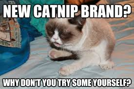 New Grumpy Cat Meme - list of synonyms and antonyms of the word new grumpy cat memes