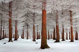 winter nature wallpapers forest snow forest winter nature wallpaper free download hd 16 9