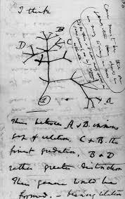 darwin u0027s tree of life sketch taken from notebook b 1837 u20131838 a