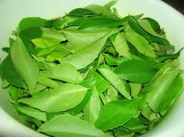 Curry Leaf Plant Diseases - amazing health benefits of curry leaves