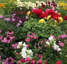 august in your garden brookside nursery