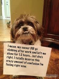 Confused Dog Meme - these dog pictures put dog shaming to shame