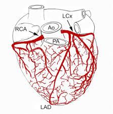 sekar u0027s science world anatomy of the human heart