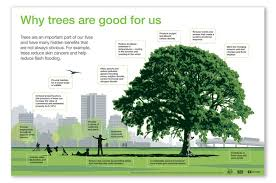 the benefits of trees https www channel uca8whin1c