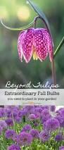 182 best bulbs for your garden images on pinterest spring