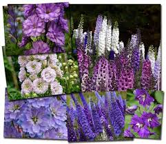 Types Of Garden Flowers - garden plants and flowers names
