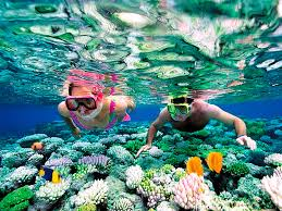 marine you can find when snorkeling in cancun aquaworld