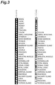 patente us7238796 human bmcc1 gene google patentes