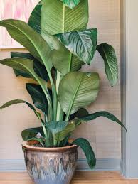 Indoor Trees For The Home by Rules For Decorating With Faux Plants Hgtv U0027s Decorating U0026 Design