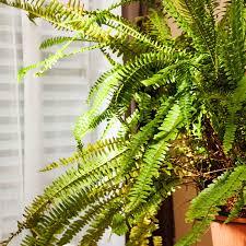 pflanzen für schlafzimmer diese pflanzen solltest du im schlafzimmer haben