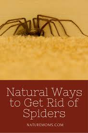 natural ways to get rid of spiders nature moms blog nature moms