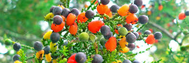 this amazing tree grows 40 different kinds of fruit inhabitat