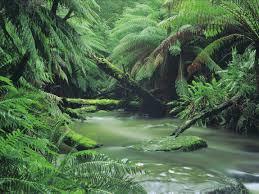 australian native water plants nature and wildlife great ocean road victoria australia