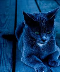 Blue Shades 41 Best Blue Images On Pinterest Color Blue Midnight Blue And