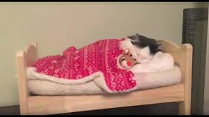 How To Get In Bed With Your Mom Cat Puts Herself To Sleep In Tiny Human Bed Youtube