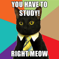 Study Memes - you have to study right meow create meme
