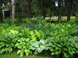 Shade Garden Vegetables by Shade Loving Bushes And Shrubs Irises Accented The Hostas