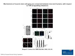 molecular aging and rejuvenation of human muscle stem cells by