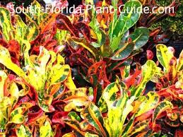 23 best landscaping images on pinterest florida plants