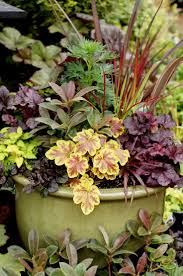 Plant Combination Ideas For Container Gardens Great Container Plant Combinations Heucheras Heucherallas Lime