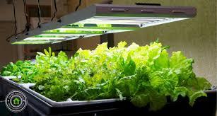 best grow lights for vegetables best t5 grow lights for indoor plants guide reviews smallgrowroom
