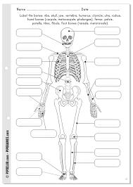 label the bones free printable activity science teaching