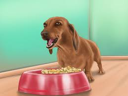 Make Bathtime Fun For Your Dog How To Wash A Dog With Pictures Wikihow
