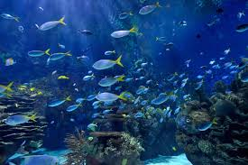 Types Of Aquarium Fish Many Types Of Aquarium Fish 4240083 800x600 All For Desktop