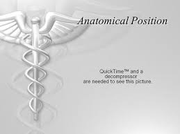 Picture Of Anatomical Position Anatomical Directions And Major Body Regions Ppt Video Online