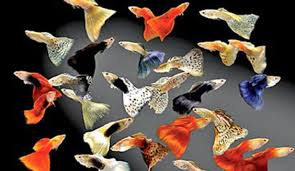 aquarium fish sri lanka export development board