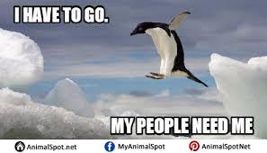 Meme Penguin - penguin meme png