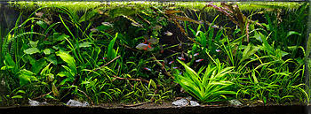 Aquascape Nj Aquascaping Wikipedia