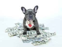 cost of owning a dog averages u0026 most expensive breeds wallethub
