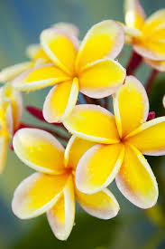 yellow flowers picture of a yellow flower best 25 yellow flowers ideas on