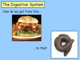 the digestive system by loulabell86 teaching resources tes