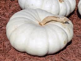 white pumpkins storing pumpkins hgtv