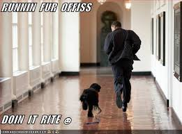 Obama Dog Meme - runnin fur offiss i has a hotdog dog pictures funny pictures