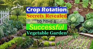 crop rotation u0026 how to do it successfully to have a productive
