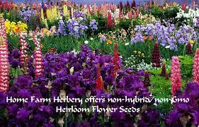 Flower Seeds Online - learn america heirloom flower seeds