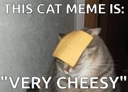 Cheesy Memes - cheesy cat meme on imgfave