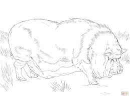 pot bellied pig coloring page free printable coloring pages