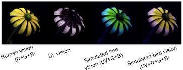 uv light for birds hidden colors you can t see them but lizards can