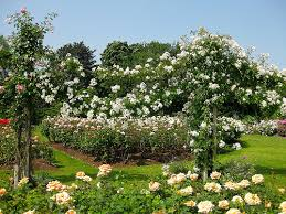 london rose gardens u2013 top five guide sequins and cherry blossom
