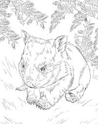download picture wombat on animal picture society