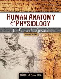 Human Physiology And Anatomy Book 44 Best Human Anatomy And Physiology Images On Pinterest Human