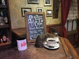dine with rats at san francisco u0027s upcoming pop up u0027rat cafe u0027 sfgate